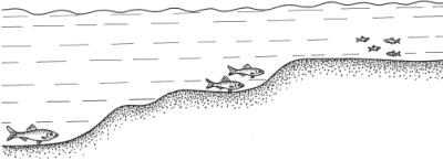 Изучение водоема
