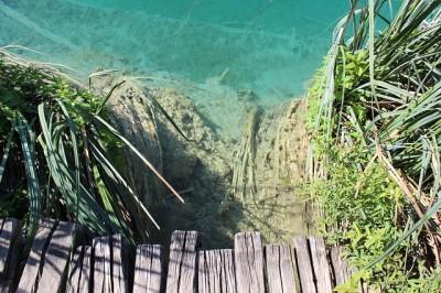 Щука в озере и в пруду