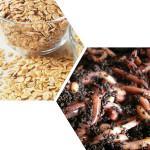 Привада на карася рецепты и виды