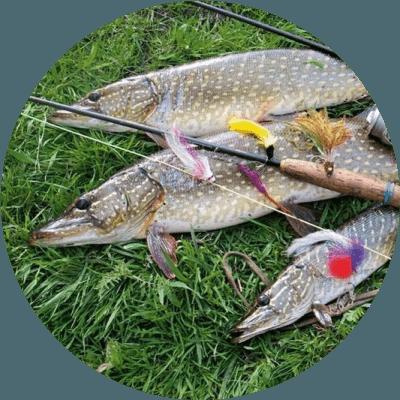 Тактика ловли щуки на спиннинг