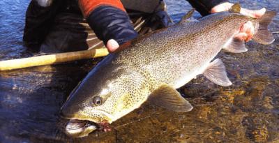 Традиционная ловля нетрадиционной рыбы или таймень на спиннинг