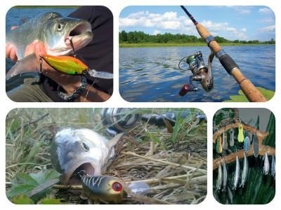 Ловля жереха на спиннинг — тонкости рыболовного дела