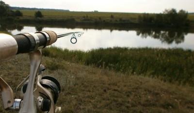 Поиск рыбы