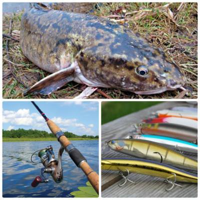 Налим весной на спиннинг: 4 фундамента для грамотной рыбалки