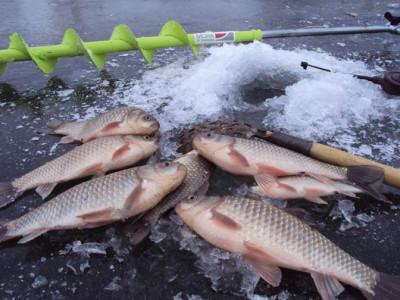 Искусство зимней рыбалки. Как ловить карася зимой?