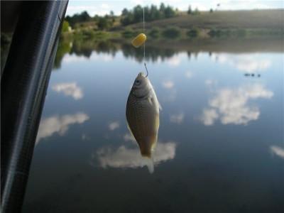 Секреты трофейной рыбалки: выбираем снасти и оснастку для ловли карася