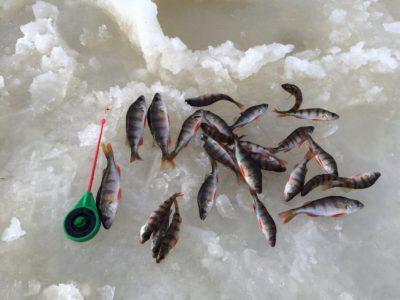 Отчет о зимней рыбалке